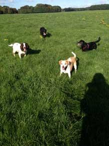 Sunny dog walk
