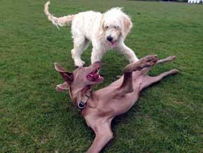 Winston and Darcy