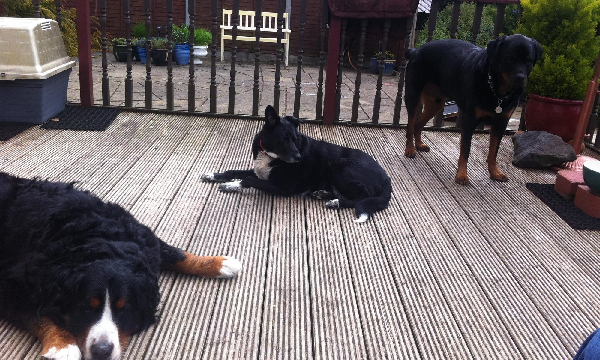 Dogs resting after walk